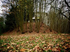 Leaves bar entry to a sparse wooded copse which hides a derelict manor house