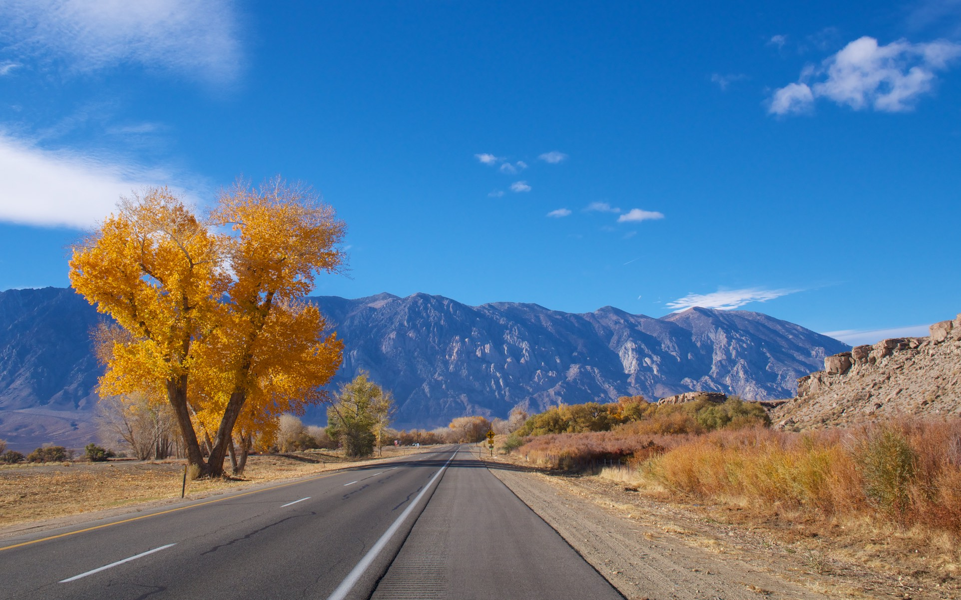 A brightly coloured tree stands by the side of a road leading to distant mountains