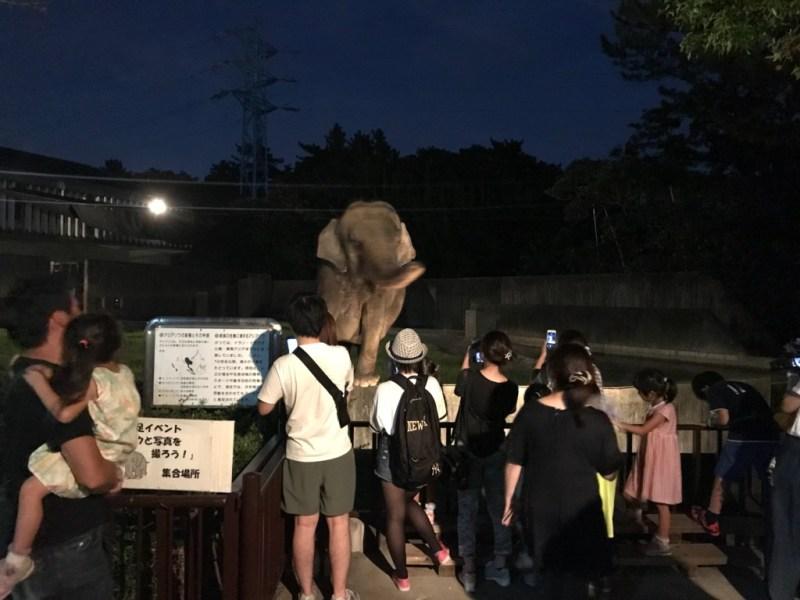 浜松動物園ナイトズー