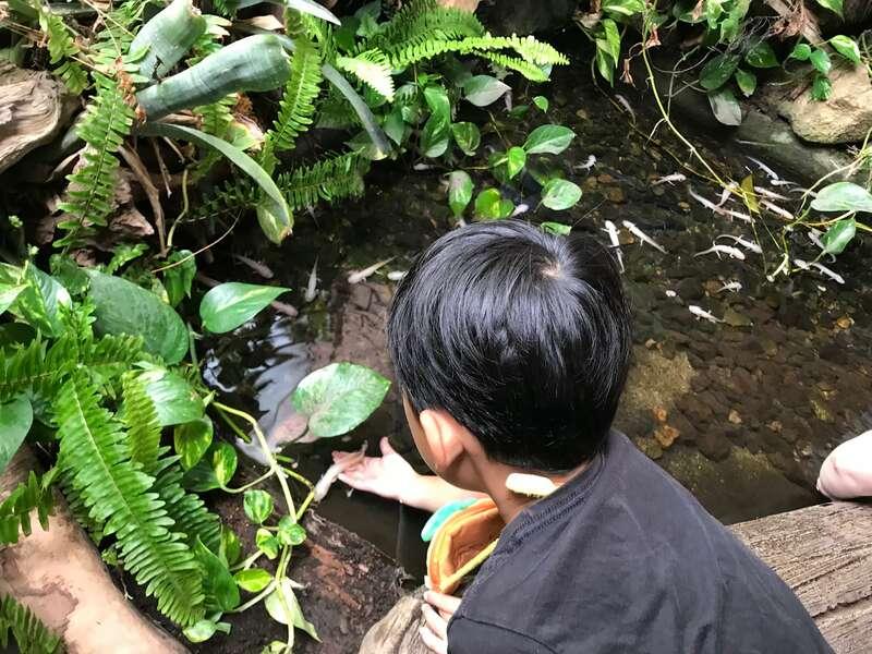 体験型動物園iZoo