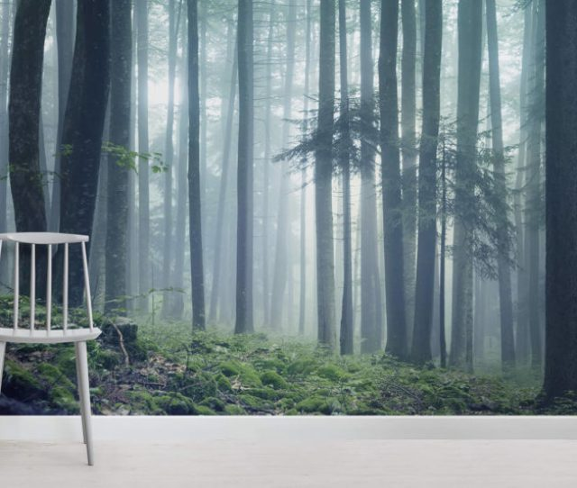 Forest Glade Forest Room  Wall Murals