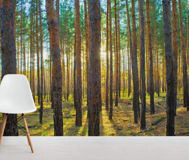 Lined Trees Forest Room Wall Murals