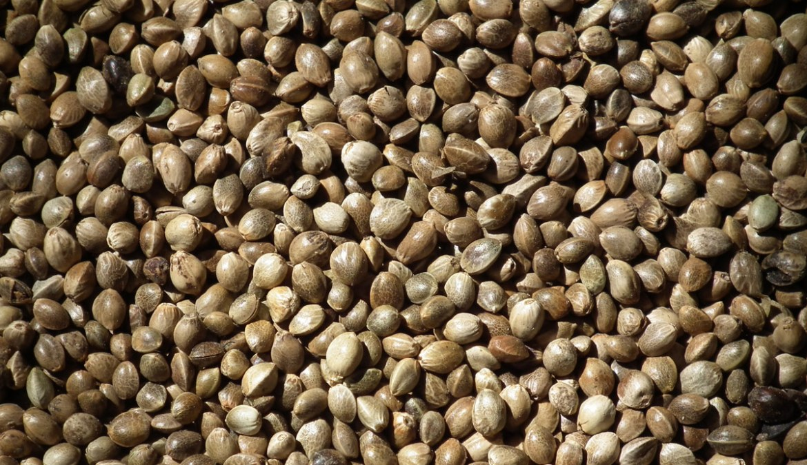 Hemp-Seed-Benefits