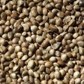 The Top 6 Benefits of Hemp Seeds