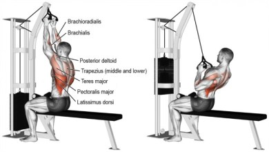 Lat Pull Back Muscle
