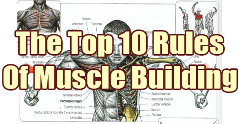 10-rules-of-muscle-building