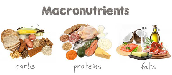 macronutrients-lean-bulk