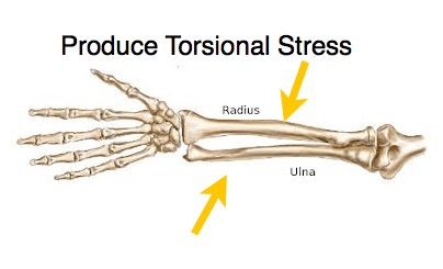 www.muscletesting.com bone screen