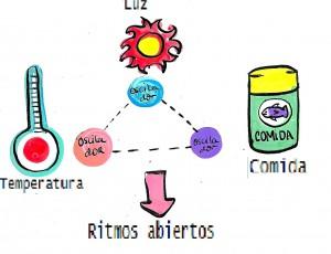 Factores que afectan al ciclo circadiano