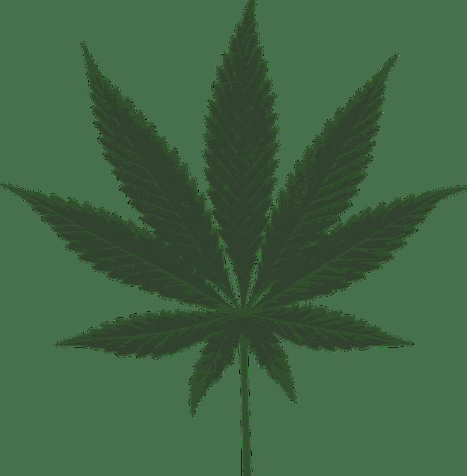 ¿Fumar marihuana afecta al desarrollo muscular?