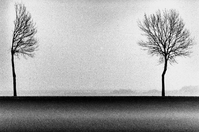 L'arbre et l'eau, parabole du mouvement. Philippe Brame 2000-2003 (21) (640x427)