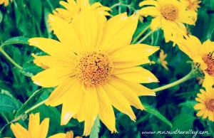 bright_yellow