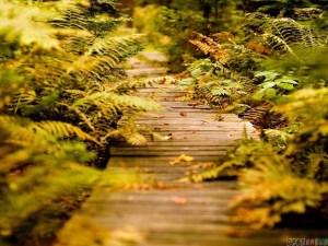 magic_path