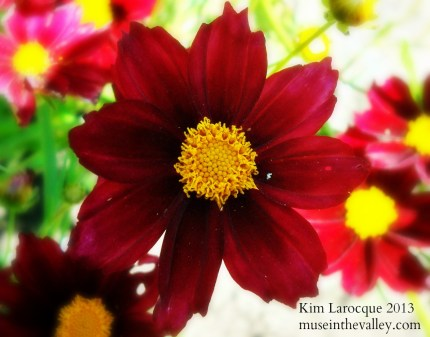 red daisylike