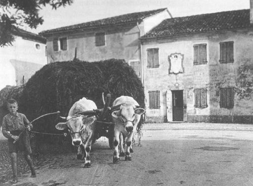 Vita rurale a Riese. Sullo sfondo la casa natale di papa Pio X