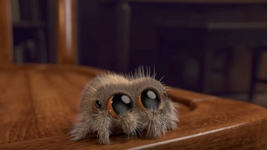 Photo of Joshua Slice Premieres Newest Lucas the Spider Animation on Youtube