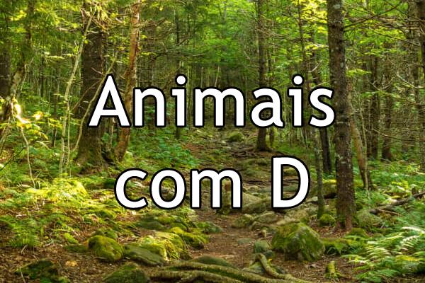 Animais com D
