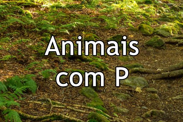 Animais com P