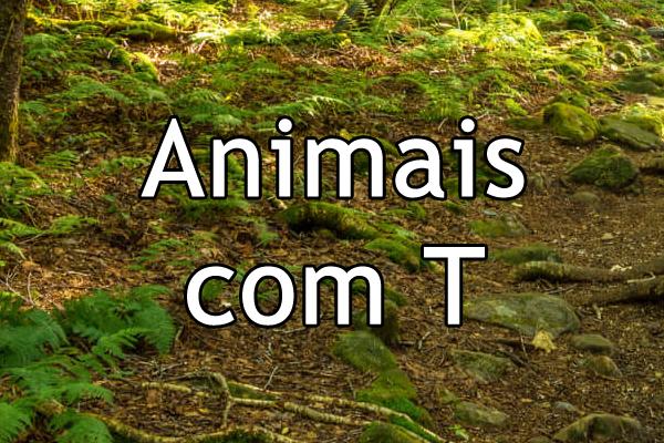 Animais com T