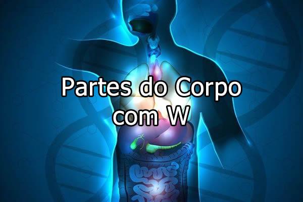 Partes do Corpo com W