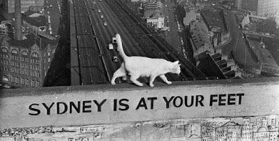 The Sydney Harbour Bridge cats