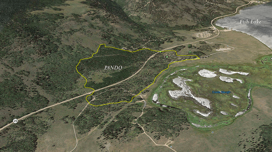 Aerial view of Pando
