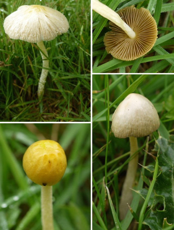 Mushroom montage