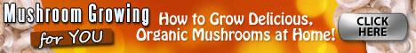 Mushroom Growing 4 You