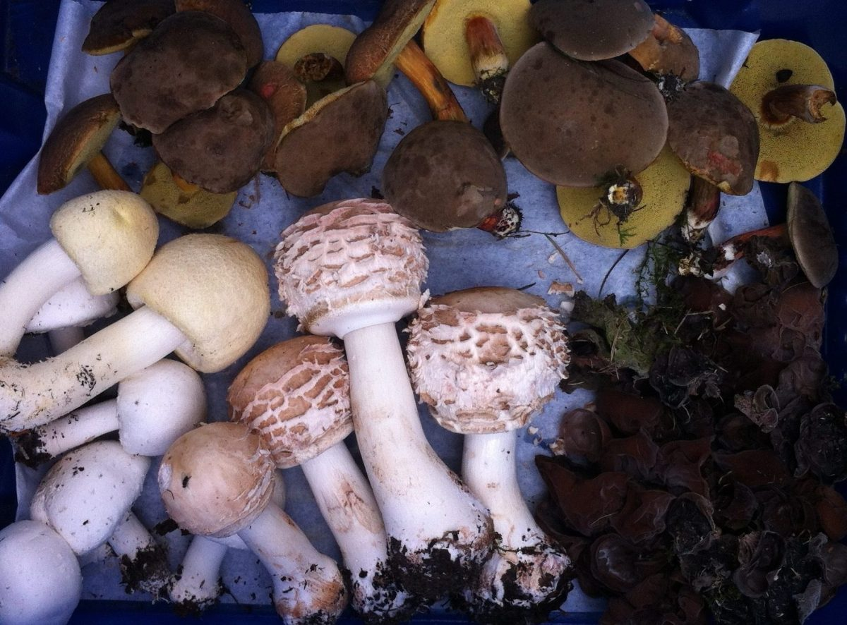 Mini-autumn in July brings mushrooms part 2