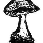 Los angeles Mycological Society