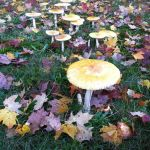 WNY Mycology Club