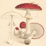 Mushroom Profiles