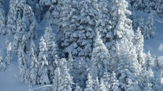 Weihnachtslieder: Leise rieselt der Schnee