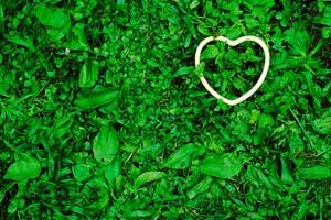 Cuore sull'erba