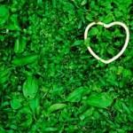 Amore: luce infinita