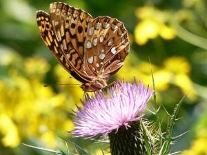Farfalla sopra un fiore