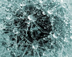 Cimatica: Masaru Emoto e i cristalli d'acqua