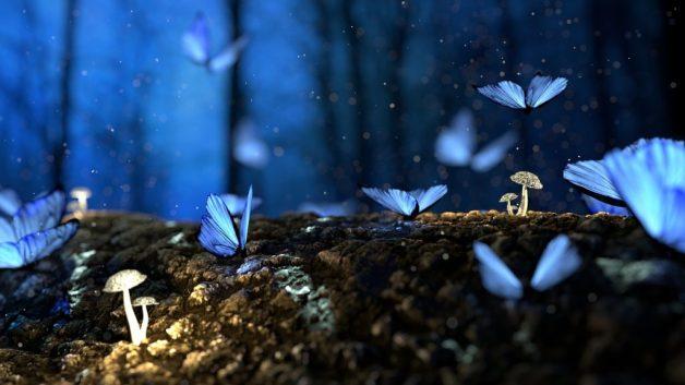 Poesia sulla Farfalla