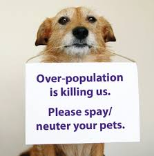 Neutering your dog helps reduce over population