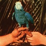 Andrew Bird – Are You Serious