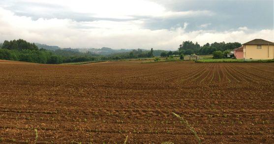Galician Farmland as we left Santa Irene