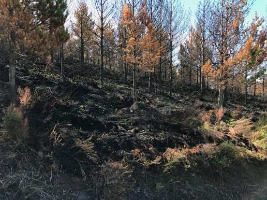 Wildfire damage on the descent to the Salime Dam