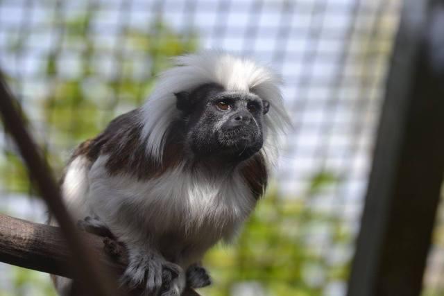 Monkey at Paradise Wildlife Park