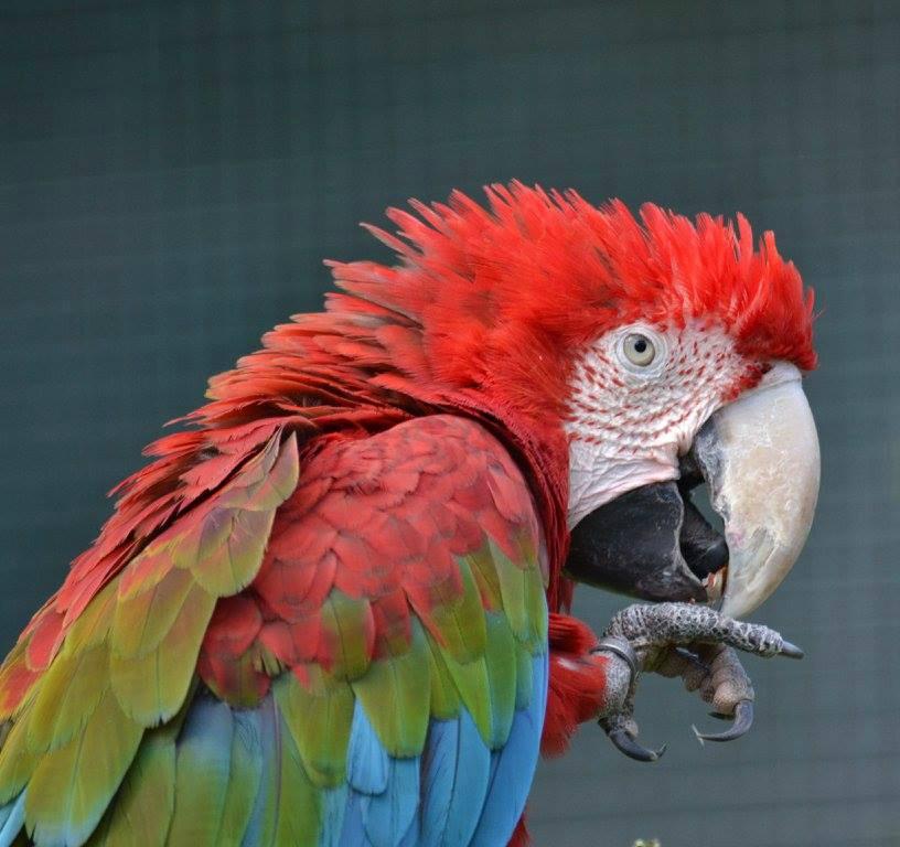 Parrot at Paradise Wildlife Park