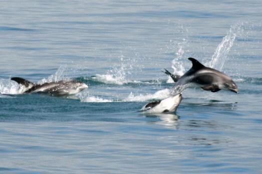 dolphins-having-fun