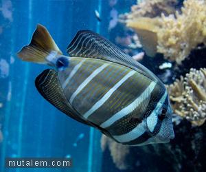 تفسير حلم رؤية السمك في المنام لابن سيرين