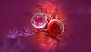 agarillus untuk kanker