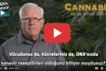 Mucize Bitki Kenevir DNA'nızın İçinde