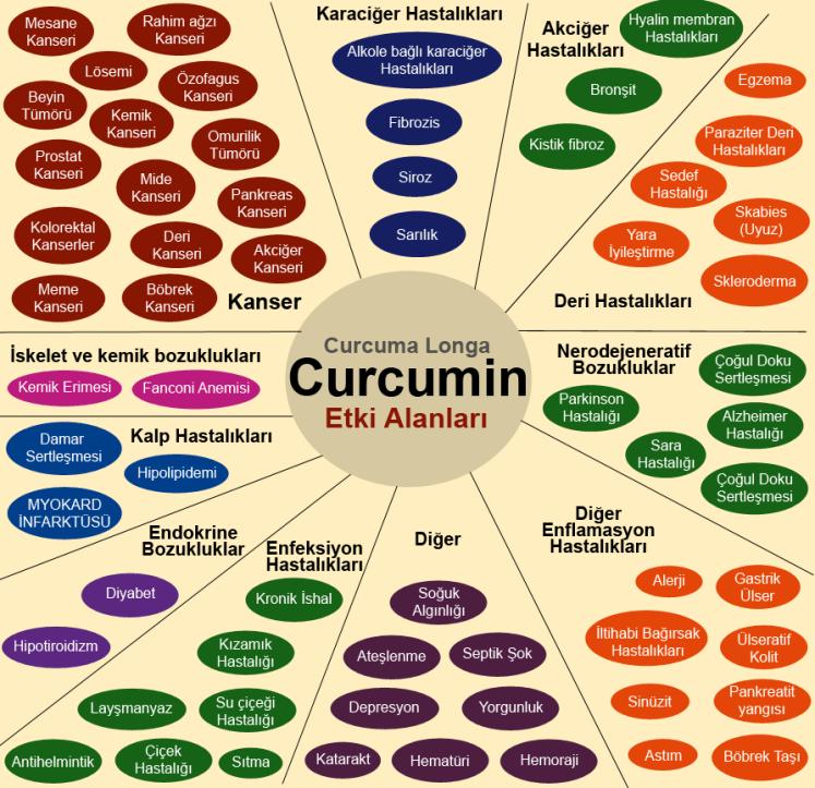 Curcumin etki alanları