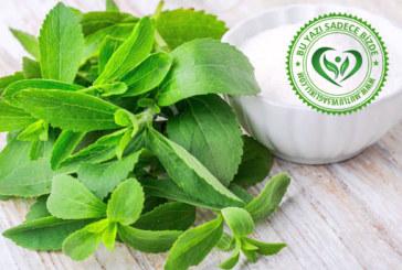 Stevia Nedir? Çeşitleri, Kullanımı, Faydaları ve Yan Etkileri